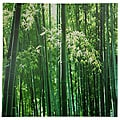 Bamboo Grove Canvas Wall Art (China)