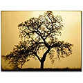 Colleen Proppe 'Pacific Oak' Gallery-wrapped Canvas Art