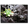Colleen Proppe 'Rock Flower' Gallery-wrapped Canvas Art
