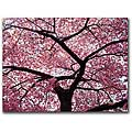 CATeyes 'Cherry Tree' Gallery-wrapped Canvas Art