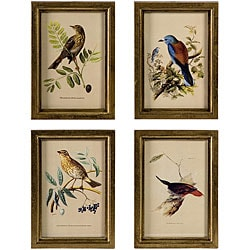 Set of 4 Regent Colorful Framed Bird Drawings