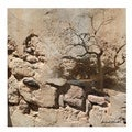 Miguel Paredes 'Rock & Tree' Gallery-wrapped Canvas Art