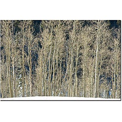 Keith Berr 'Aspen Snow' Gallery-wrapped Canvas Art