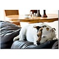 Gifty Idea Greeting Cards and Such! 'Jack Russel' Canvas Art