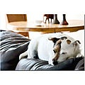 Gifty Idea Greeting Cards and Such! 'Jack Russel II' Canvas Art