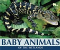 Baby Animals of the Wetlands (Hardcover)