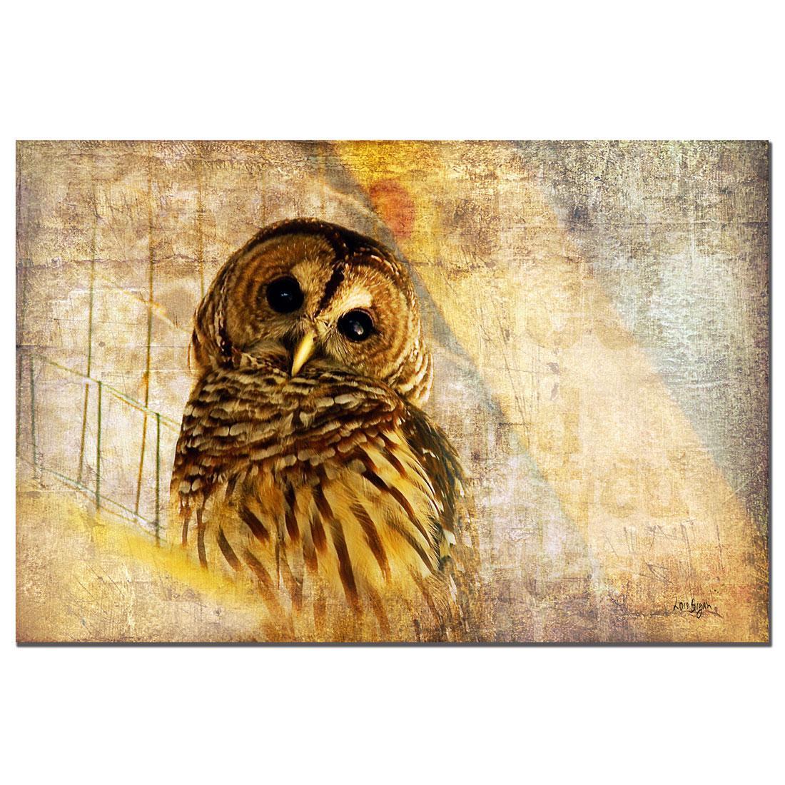 Lois Bryan 'Owl' Canvas Art