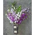 Dendrobium Orchids (12 Stems)