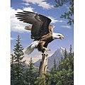 Reeves Artist Collection 'Screaming Eagle' Paint by Number