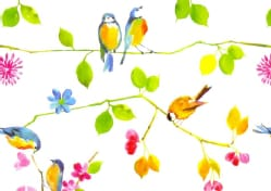 Watercolor Birds Note Cards (Cards)
