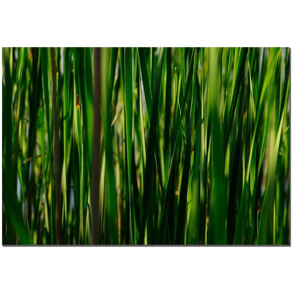 Kurt Shaffer 'Prairie Grass II' Canvas Art