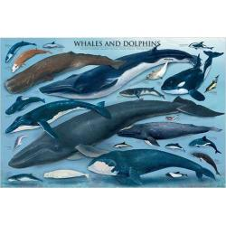 Eurographics Inc 1000-piece Whales and Dolphins Puzzle