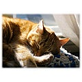 Orange Cat Art 'Cat Nap' Photographic Print