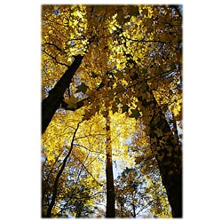 Orange Cat Art 'Sunlit Sweetgum Trees' Photographic Print
