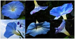 Miette Michie Morning Glory 12-pack Notecards Set