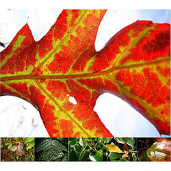 Miette Michie Photography 12-pack Leaf Photo Notecards Set
