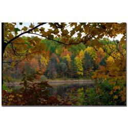 Kurt Shaffer 'Full Color Fall' Canvas Art