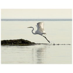 Orange Cat Art Jill M. Davis 'Great Egret Takes Flight' Photo Print