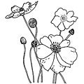 Penny Black Poppies Rubber Stamp