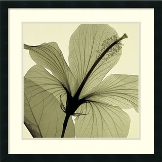 Steven N. Meyers 'Hibiscus (green)' Framed Art Print