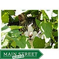 Orange Cat Art Jill M. Davis 'Green Eyes' Photographic Print