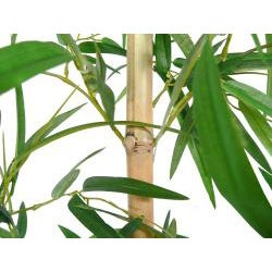Laura Ashley Bamboo Tree Screen