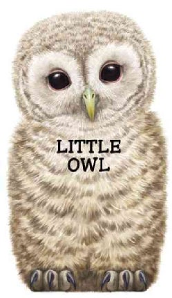 Little Owl (Board book)