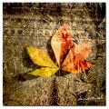Miguel Paredes 'Red Leaves II' Canvas Art