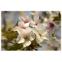 Orange Cat Art 'Yunnan Crabapple Blossoms' Photographic Print