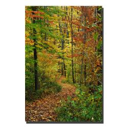 Kurt Shaffer 'Fall Path' Canvas Art