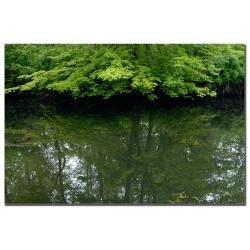 Kurt Shaffer 'Maple Marsh Reflections' Canvas Art