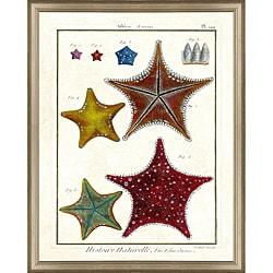 'Diderot Sea Life Print I' Framed Print