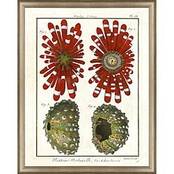 'Diderot Sea Life Print III' Framed Print
