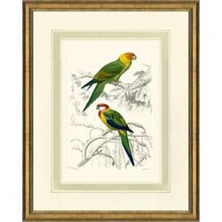 'D'Oridgy Bird Print II' Framed Print