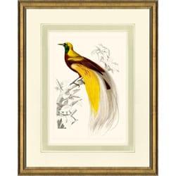 'D'Oridgy Bird Print III' Framed Print