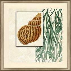 'Shell Design Print II' Framed Art