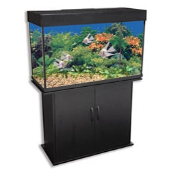 Delta Queen 46-gallon Rectangular Aquarium and Black Stand