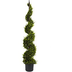 Cypress Spiral 5-foot Silk Tree