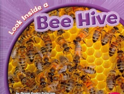 Look Inside a Bee Hive (Hardcover)