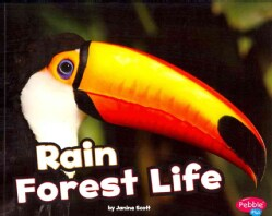 Rain Forest Life (Paperback)