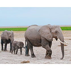 Stewart Parr 'Elephants in Kenya Mother and Baby' Unframed Print