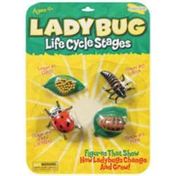 Ladybug Life Cycle Stages