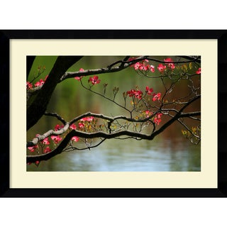 Andy Magee 'Dogwood in Bloom' Framed Art Print