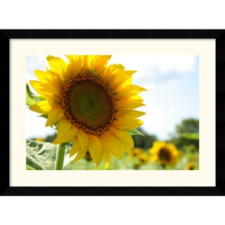 Andy Magee 'Sunflowers' Framed Print Art