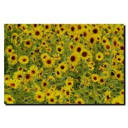 Kurt Shaffer 'A Sunflower Day' Canvas Art