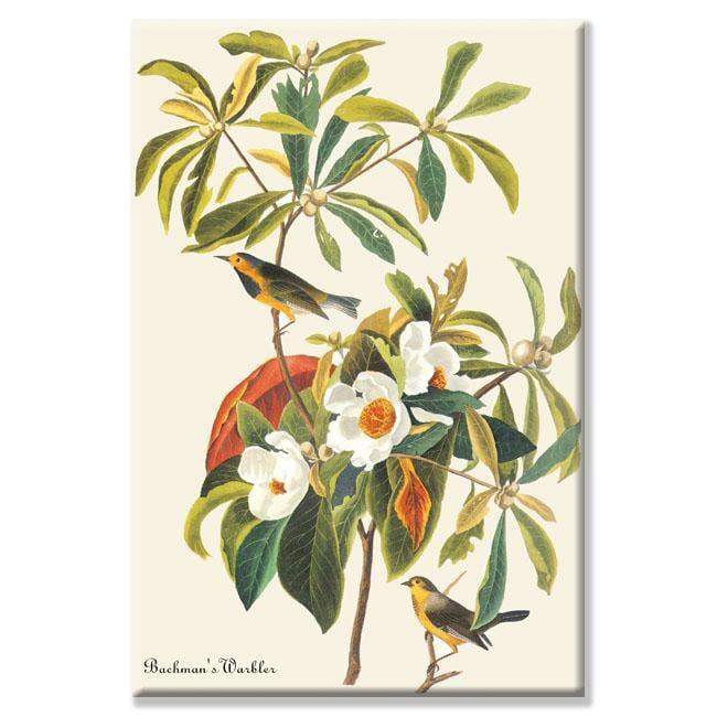 John James Audubon 'Bachman's Warbler' Canvas Art