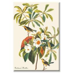 John James Audubon 'Bachman's Warbler' Canvas Art