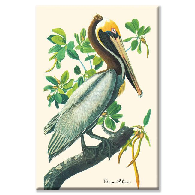 John James Audubon 'Brown Pelican' Canvas Art
