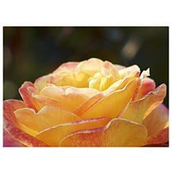 Orange Cat Art Jill M. Davis 'Sunrise Rose' Photographic Print