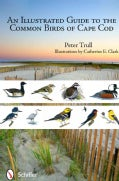 An Illustrated Guide to the Common Birds of Cape Cod (Paperback)